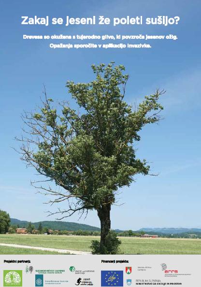 Brošura jesenov ožig