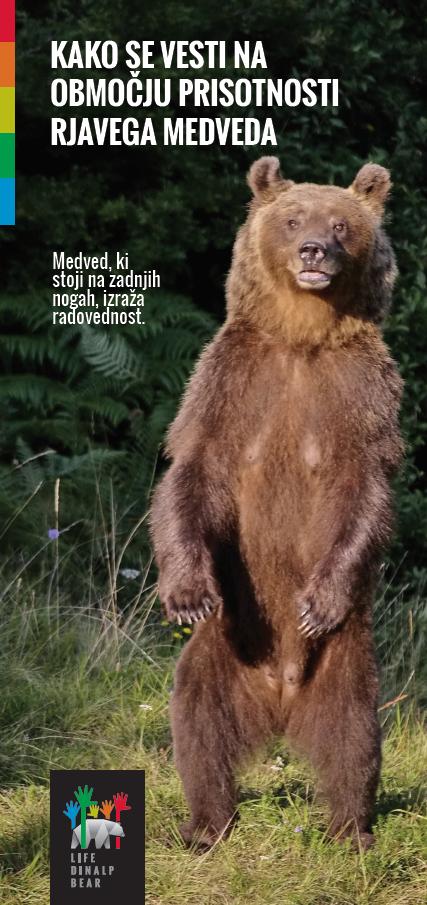 Kako se vesti na območju prisotnosti rjavega medveda