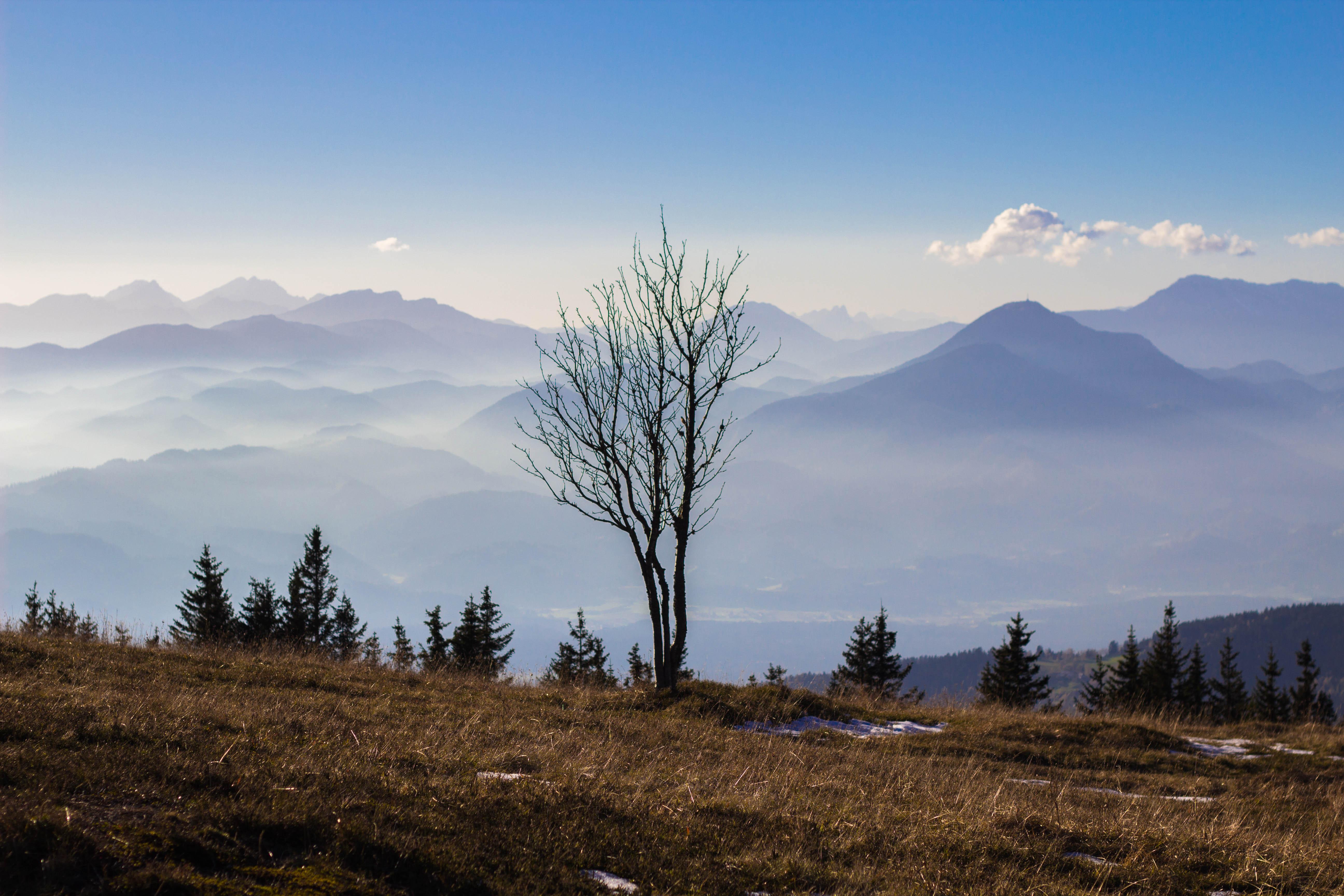 Številni ukrepi za naravo Pohorja