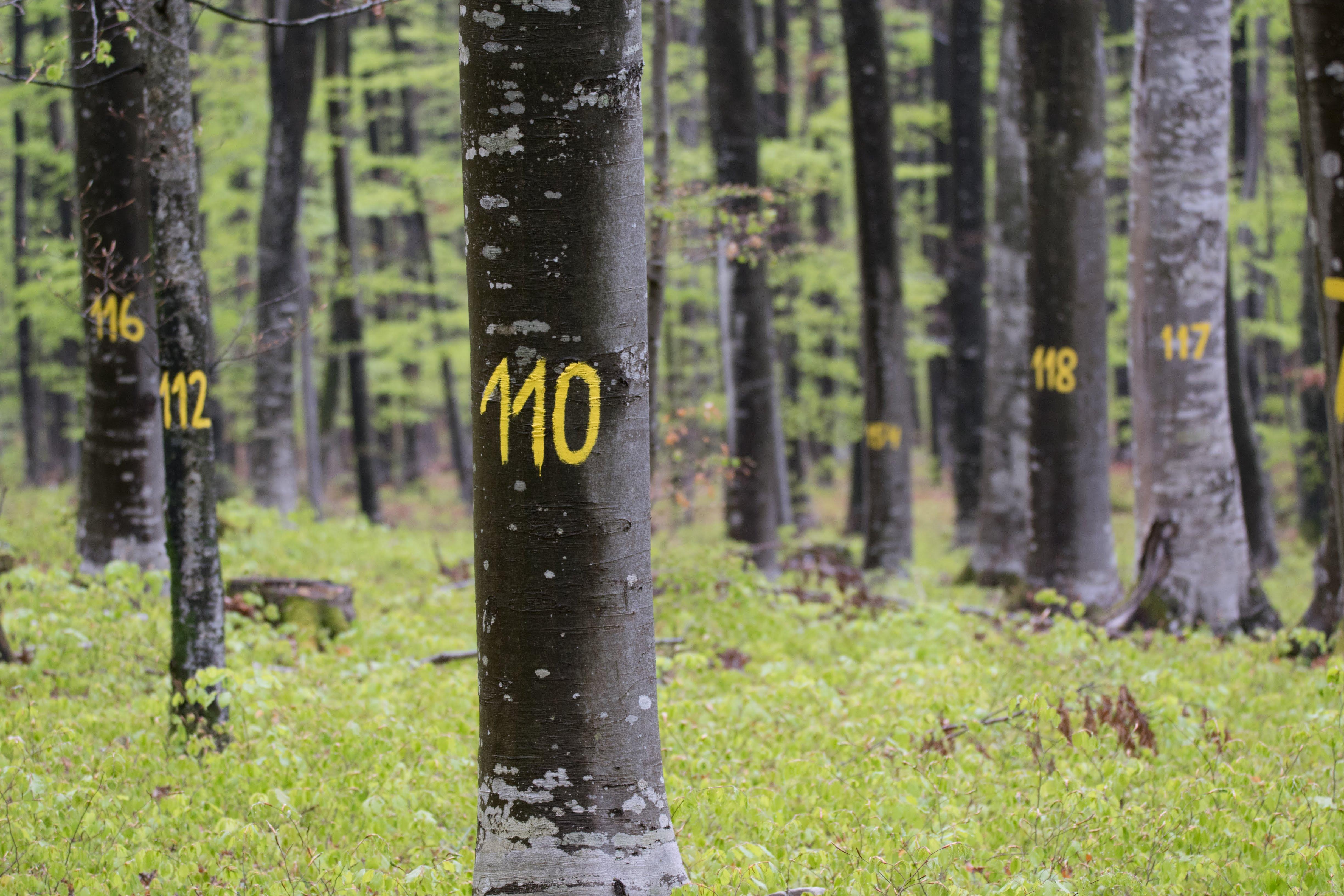 """Zaključna konferenca LIFEGENMON: """"Gozdarska znanost za prihodnje gozdove: gozdni genetski monitoring in biotska raznovrstnost v spreminjajočem se okolju"""""""